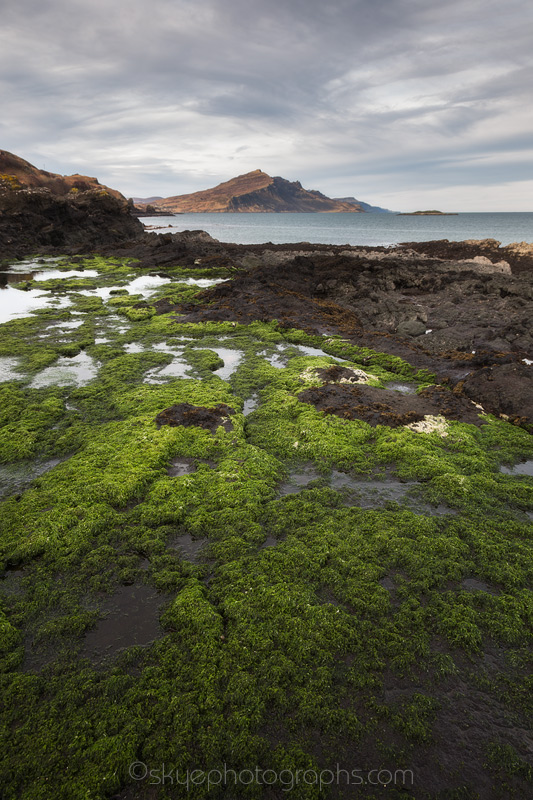 Sea Lettuce at Braes