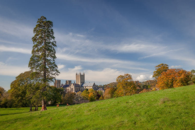 Wells Cathedral amidst the Trees