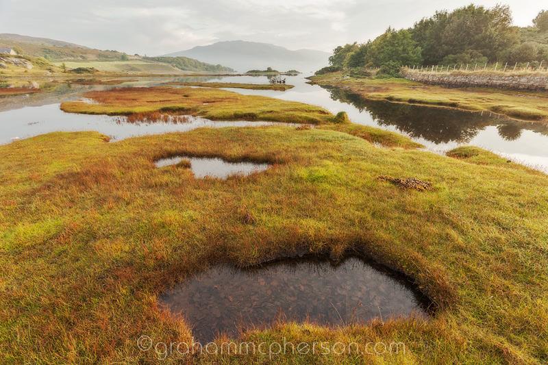 Isle Ornsay Sea Grasses