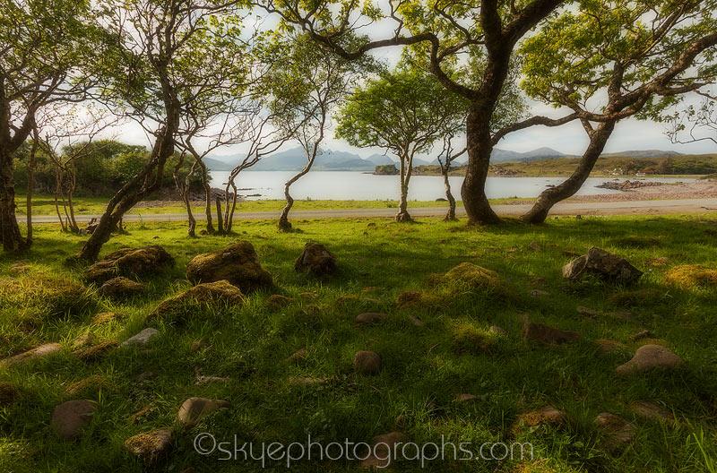 Tokavaig Through the Trees