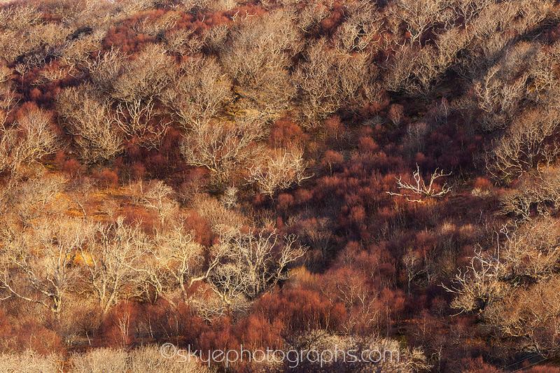 Tokavaig Tree Texture