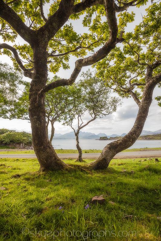 Tokavaig Tree