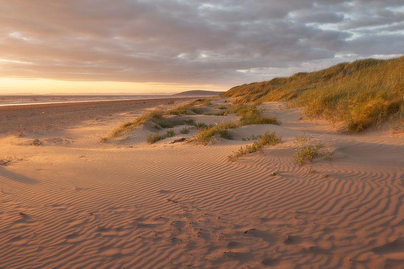 Berrow and Brean Sand Dunes