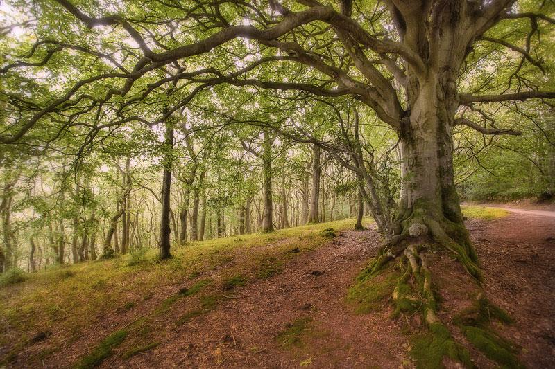 Quantock Woods
