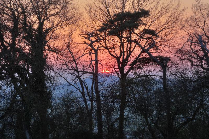 Glastonbury Tor Through the Trees
