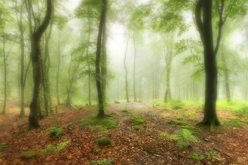 Beacon Hill Misty Wood
