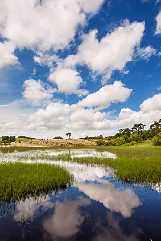 Waldegrave Cloud Reflection
