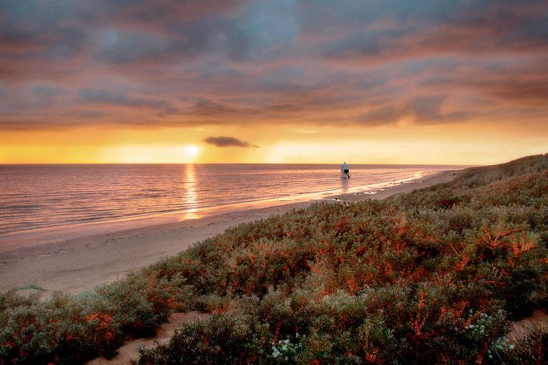 Burnham on Sea Buckthorn Dunes