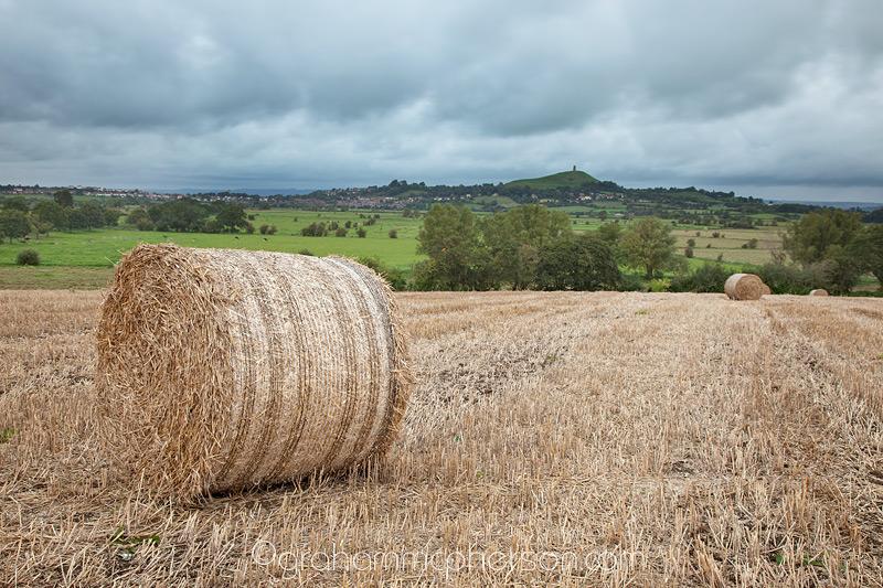 Somerset Harvest