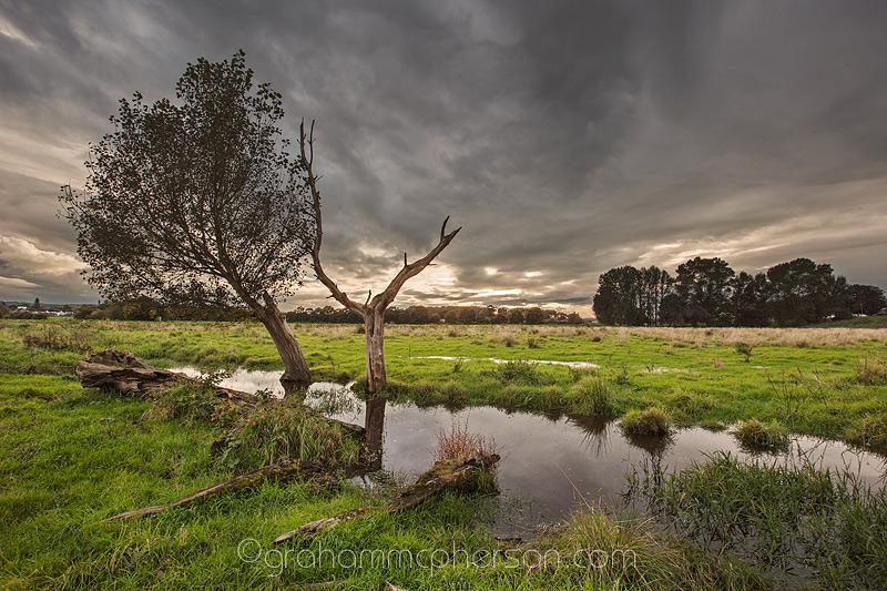Somerset Wetland