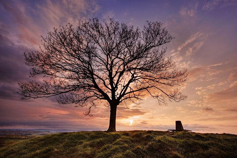 Burrow Hill Tree at Sunset