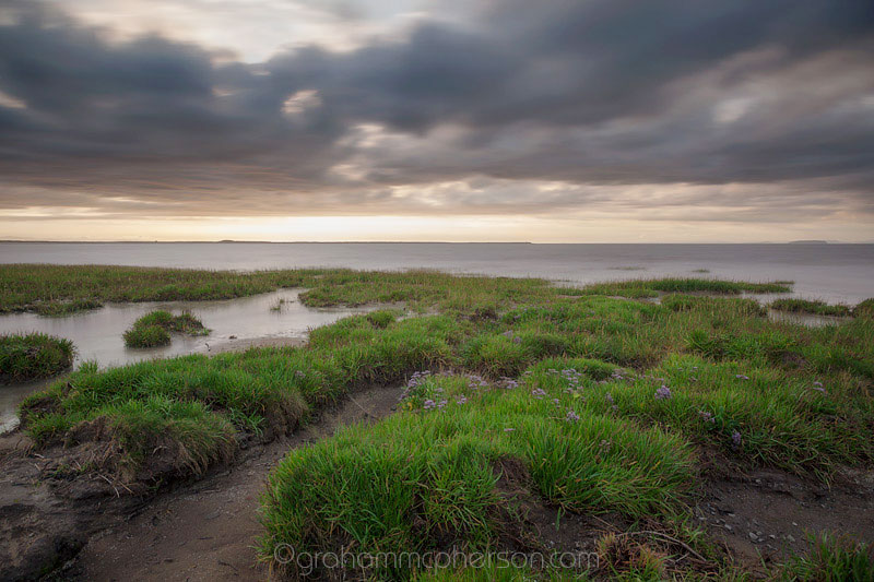 Burnham on Sea Sea Grass