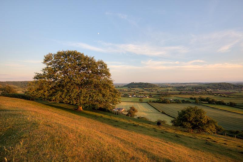 Mid Somerset Collard Hill